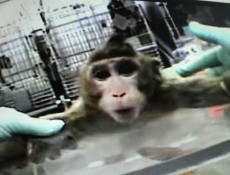False and Misleading Claims Relating to Animal Testing