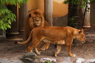 Zoo is cruelty
