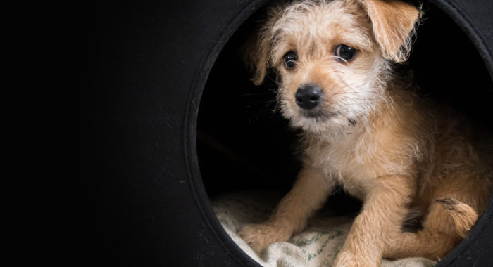 Microchipped pets are 2.5 times more likely to be returned to their owners.